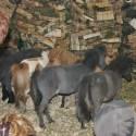 detzkyhoeve-pony-knuffel-kerstival-10.jpg