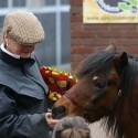 detzkyhoeve-pony-knuffel-kerstival-16.jpg