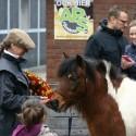 detzkyhoeve-pony-knuffel-kerstival-17.jpg