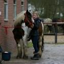 detzkyhoeve-pony-knuffel-kerstival-21.jpg