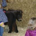 detzkyhoeve-pony-knuffel-kerstival-34.jpg