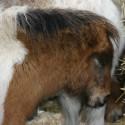 detzkyhoeve-pony-knuffel-kerstival-35.jpg