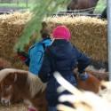 detzkyhoeve-pony-knuffel-kerstival-36.jpg