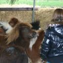 detzkyhoeve-pony-knuffel-kerstival-38.jpg