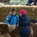 detzkyhoeve-pony-knuffel-kerstival-39.jpg
