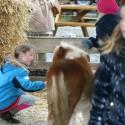 detzkyhoeve-pony-knuffel-kerstival-42.jpg