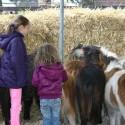 detzkyhoeve-pony-knuffel-kerstival-44.jpg