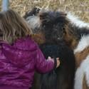 detzkyhoeve-pony-knuffel-kerstival-45.jpg
