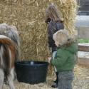 detzkyhoeve-pony-knuffel-kerstival-47.jpg