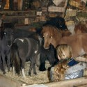 detzkyhoeve-pony-knuffel-kerstival-49.jpg