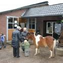 detzkyhoeve-pony-knuffel-kerstival-5.jpg
