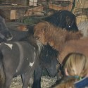 detzkyhoeve-pony-knuffel-kerstival-50.jpg