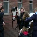 detzkyhoeve-pony-knuffel-kerstival-52.jpg