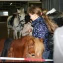 detzkyhoeve-pony-knuffel-kerstival-67.jpg