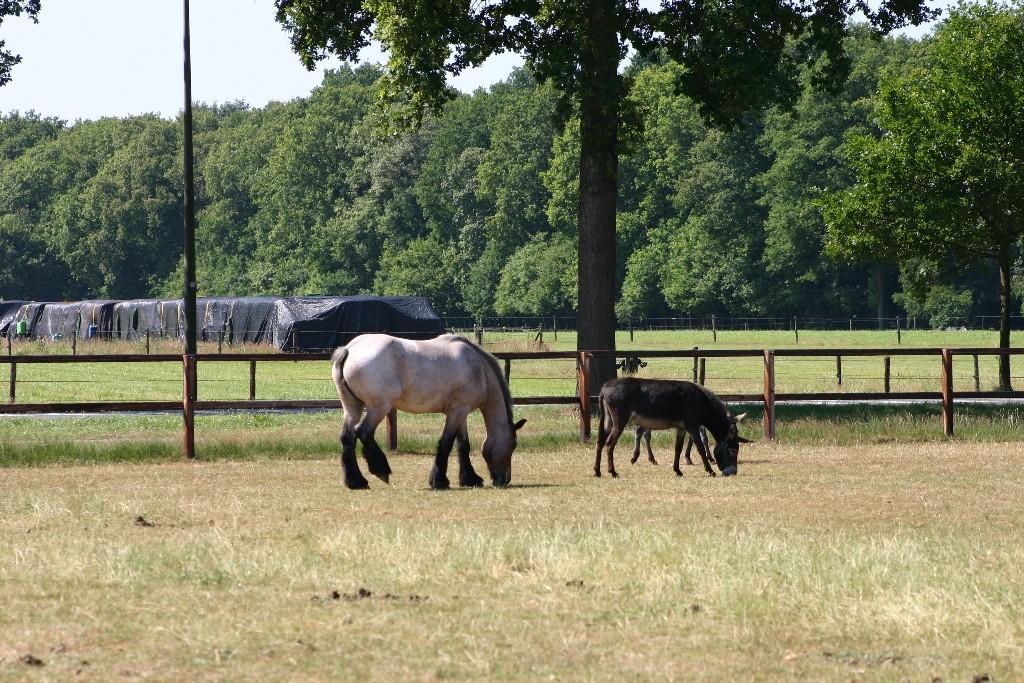 Belgisch werkpaard huren Soest Baarn Amersfoort