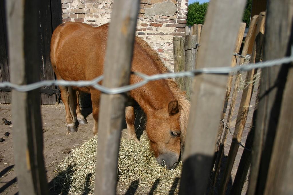 Pony huren amersfoort soest Detzkyhoeve verhuur