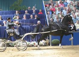 Showpaard Soest Detzkyhoeve