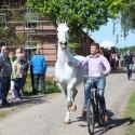 veiling-detzkyhoeve-3-mei-2014-foto-door-matthijs-hoebe-58.jpg
